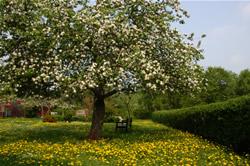apfelbluete, Frühjahrstracht, Pollen und Nektar
