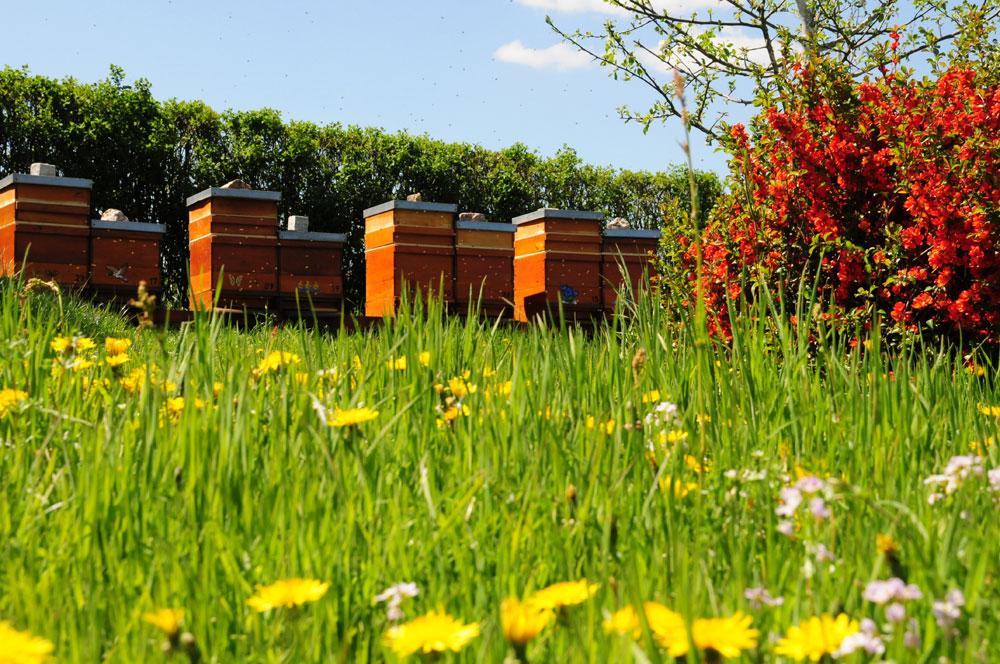 blühende Wiesen im Frühling, Bienenweide