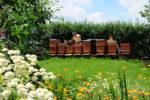 Imker bei Bienenkontrolle