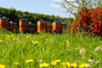 Bienenbeuten, blühende Wiese