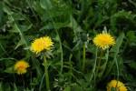 Wiesenblumen, Pollenspender, Nektarspender
