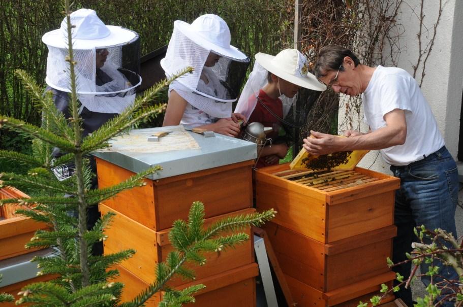 Kinder untersuchen mit Hilfe eines Erwachsenen die Bienen
