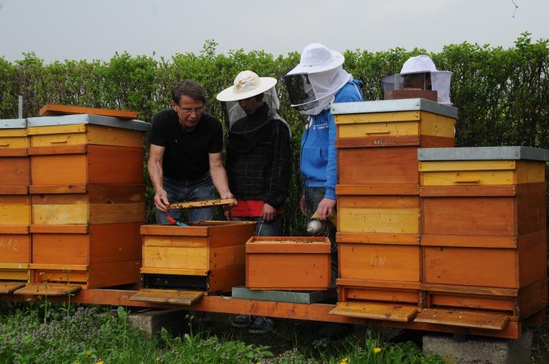 AG bei der Arbeit am Bienenvolk