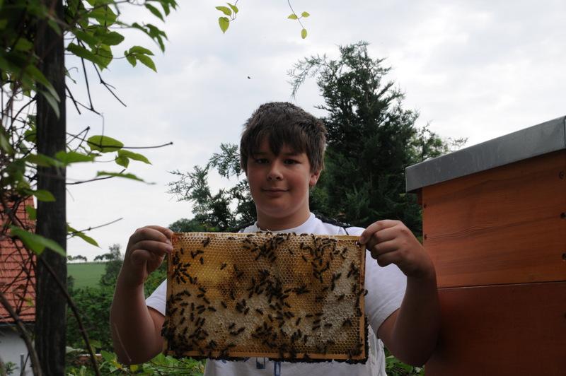 keine Angst vor Bienen