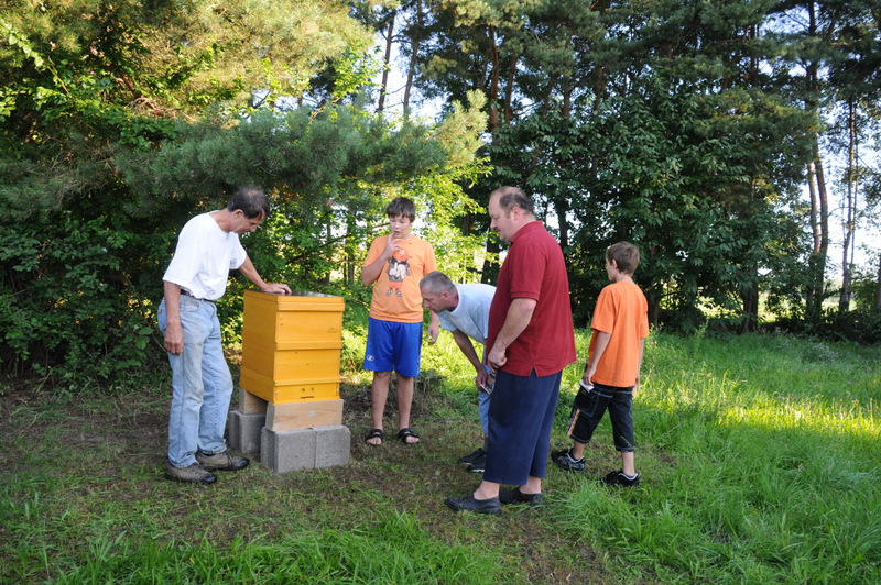 Bienenvolk im eigenen Garten