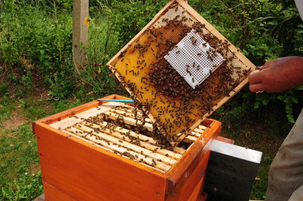 Bienenbeute mit Bienen