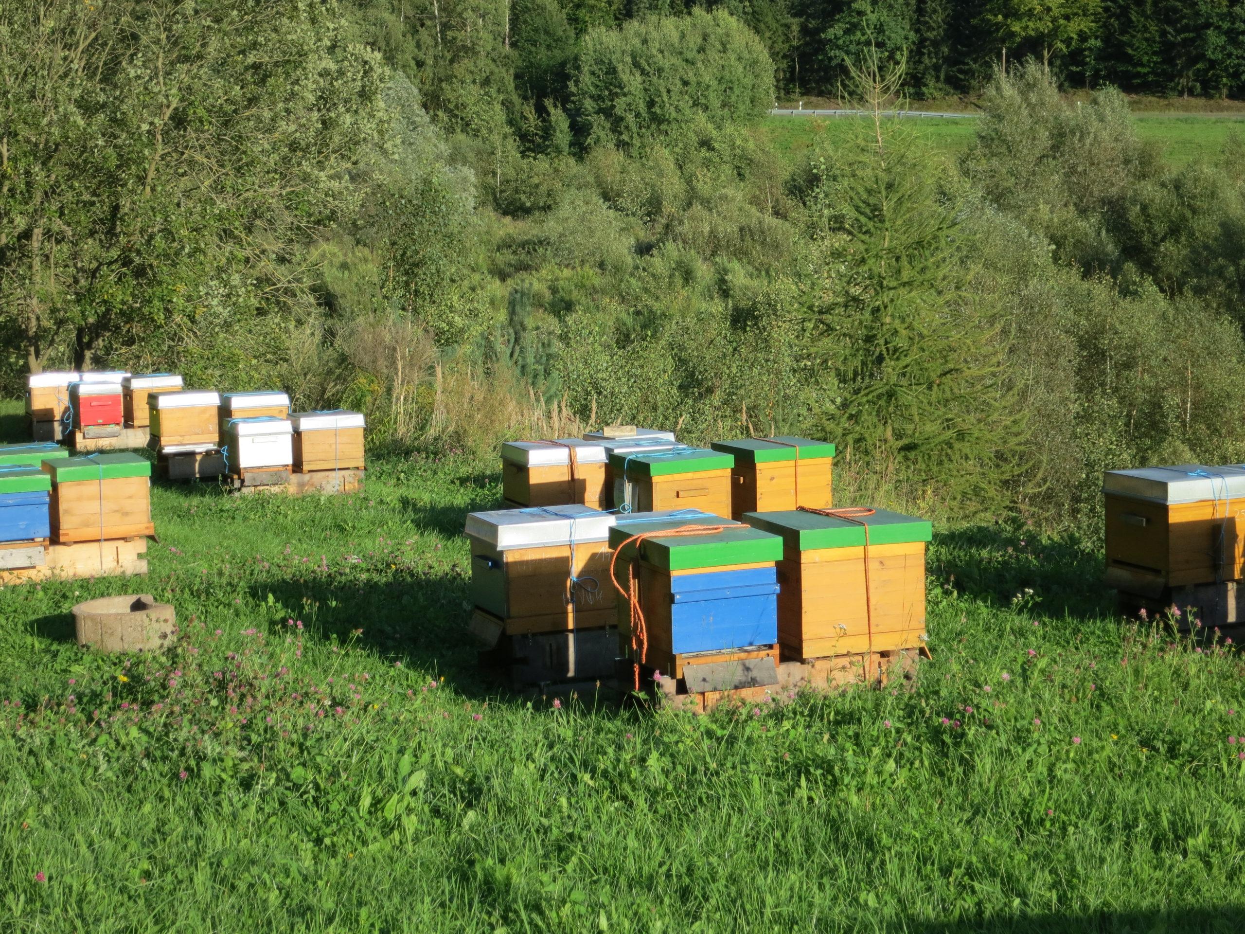 Bienenstand eines Imkers