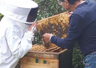 AG Bienenvolk